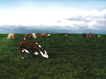 Hereford, oil on masonite, 1996
