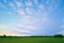 barley2_2003g