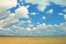 wheatfield_2005g